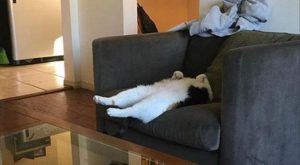 Funny Cat – 45 Pictures