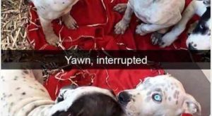 "Funny Animal Picture Dump Of The Day 23 Pics #funnydogs explore Pinterest""> #funnydogs"