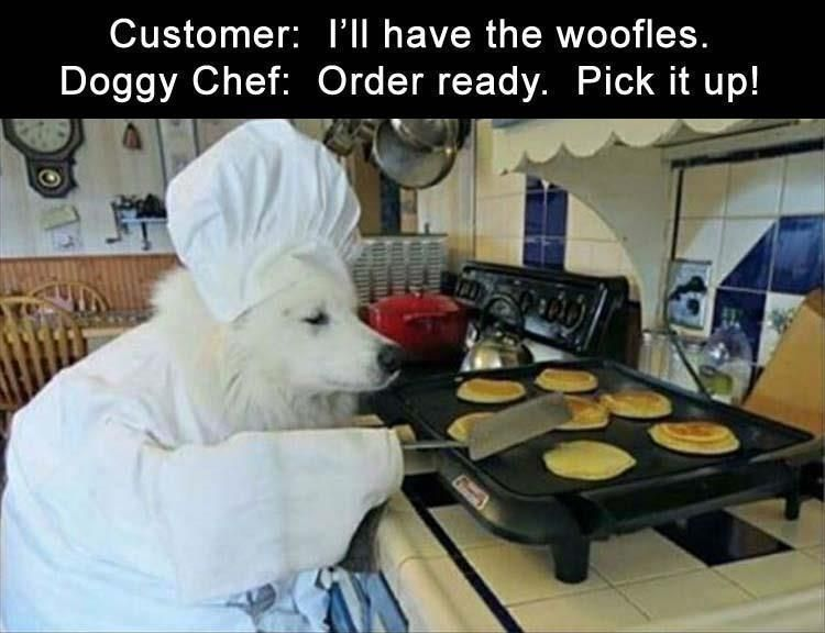 """5 Funny Animal Pictures Of Today – #funnymemes explore Pinterest""""> #funnymemes #funnypictures explore Pinterest"""">…"""