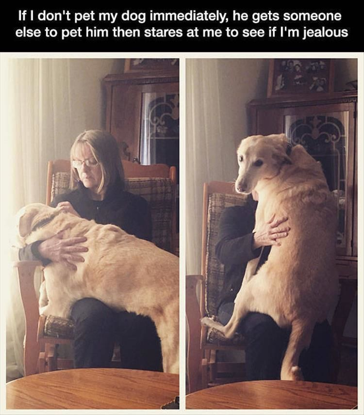 Funny Animal Pictures Of The Day – 14 Images