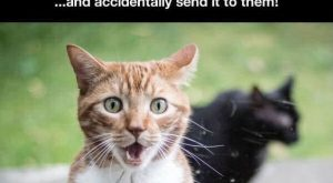 14 Hilarious Cats Who Behave Exactly Like Us At Work cute animals cat cats…
