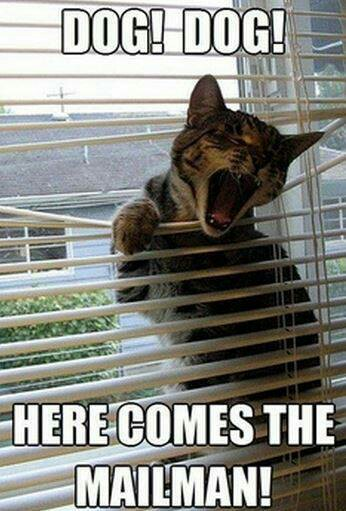 The never ending battle between cats and blinds (24 Photos)