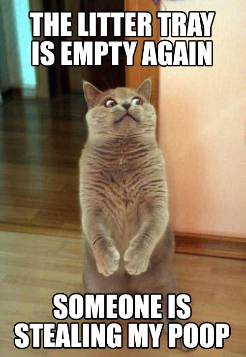 These Funny Cat Photos provide that humour break for when you need it most.…