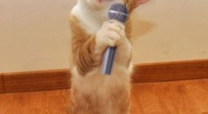 Funny Cat Pictures. Cat singing with microphone. Tap the link for an awesome selection…