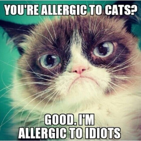 A Collection Of Grumpy Cats Best Memes – I Can Has Cheezburger? – Funny…