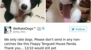 19 Times people failed to send dog pics to 'We Rate Dogs' #funnydoglaughter explore…...