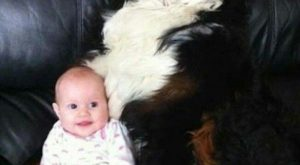 "Dog and baby #funnydoglaughter explore Pinterest""> #funnydoglaughter"