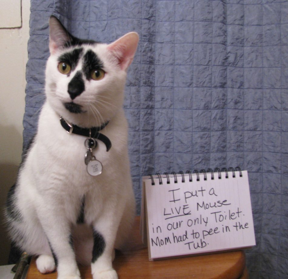Naughtiest Animals You Will See Click for all pictures Pet shaming, cat, humor, funny,…