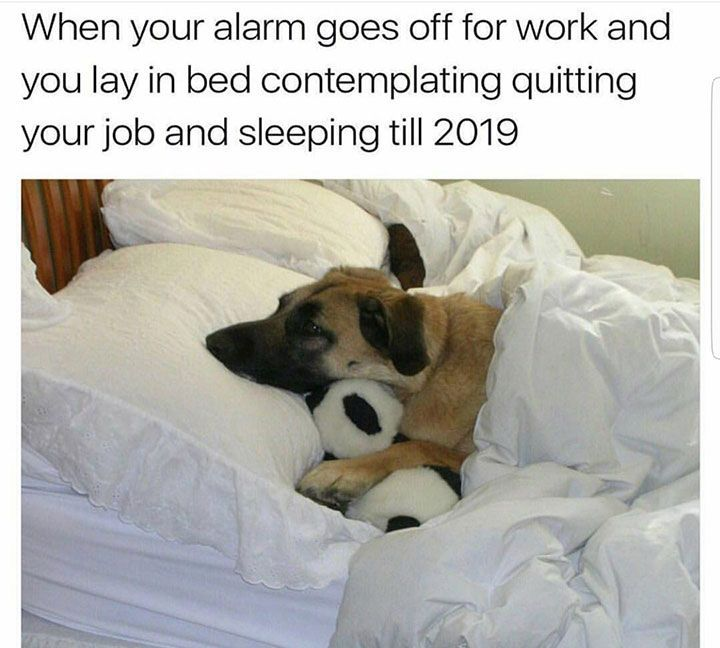 """Funny Dog Pictures Dump of the Day – 23 #funnydogquotes explore Pinterest"""">..."""