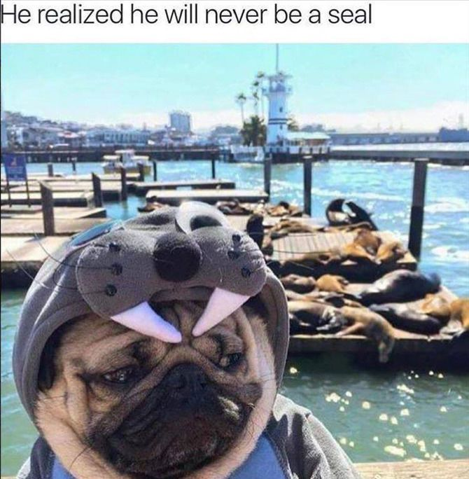Funny Animal Pictures Of The Day – 23 images #funnydogshaming explore Pinterest&#822...