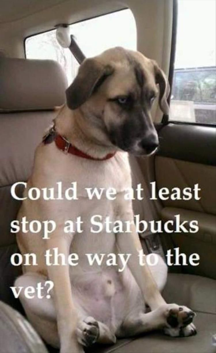 "Funny Animal Pictures Of The Day – 21 Pics #funnydogquotes explore Pinterest""&..."