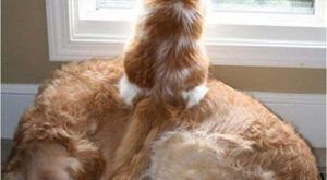 Best 50 Funny Dogs VS Cats Memes Images To Prove Whos Boss #funnydogs explore…