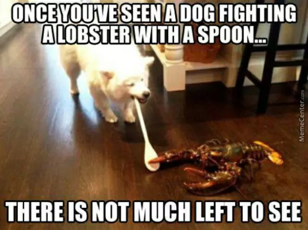 Brave Dog:   36 Dog Pictures On The Internet That Are Never Not Funny…