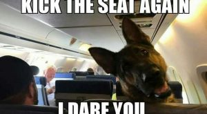 "The German Shepherd #funnydogpictures explore Pinterest""> #funnydogpictures"