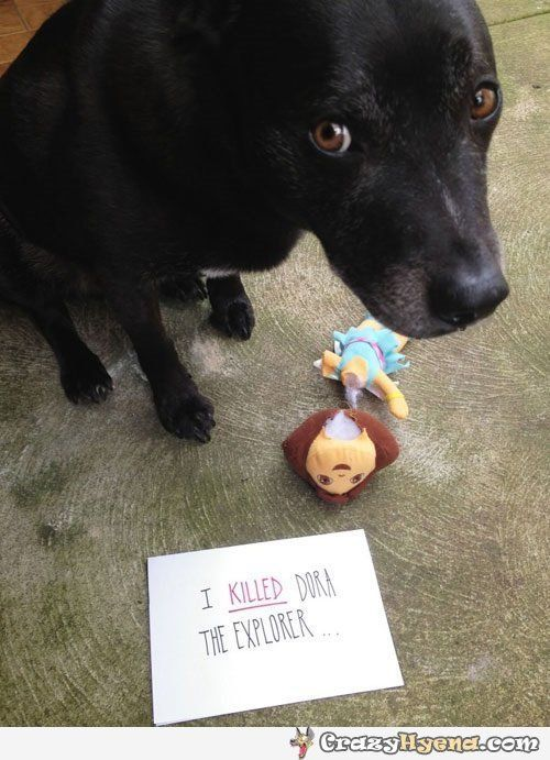 Guilty dog with the eyes of a killer. Hilarious pic. Good dog / bad…