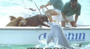 funny animal memes, animal pictures with captions, funny animals #funnydogwithcaptions exp...