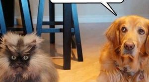 Funny Dogs with Captions | Funny pictures w/ #funnydogwithcaptions explore Pinterest&#8221...