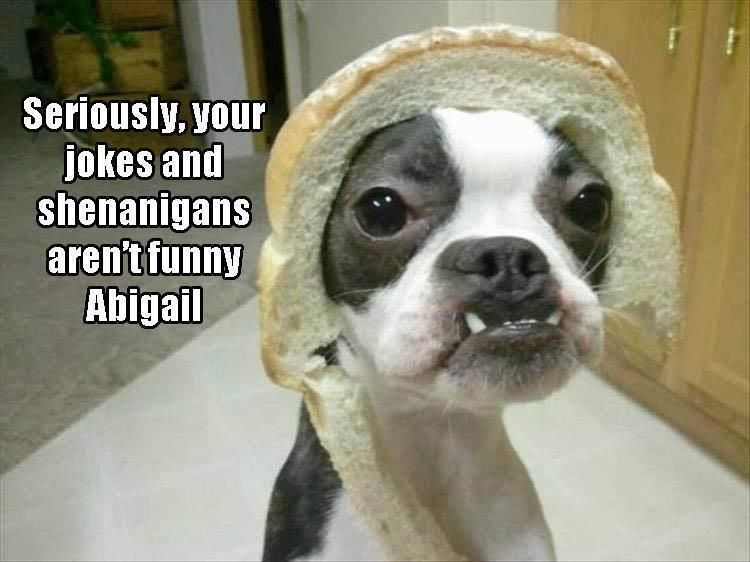 Funny Animal Pictures Of The Day – 10 Images #funnydoghilarious explore Pinterest&#8...