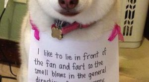 Good dog!…I'm sure your mommy appreciates it. #funnydogshaming explore Pintere...