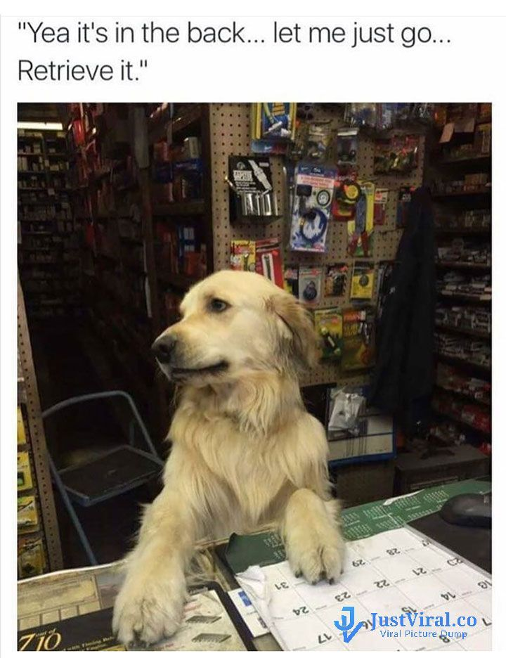 Funny Dog Memes That Will Cure Your Bad Day – 3 #funnydoghilarious explore Pinterest...