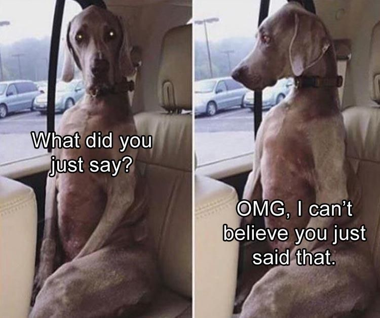 """Funny Animal Pictures 