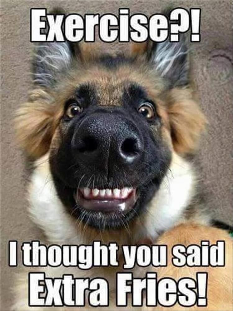 Funny Animal Pictures Of The Day – 24 Pics More #funnydogpictures explore Pinterest&#822...