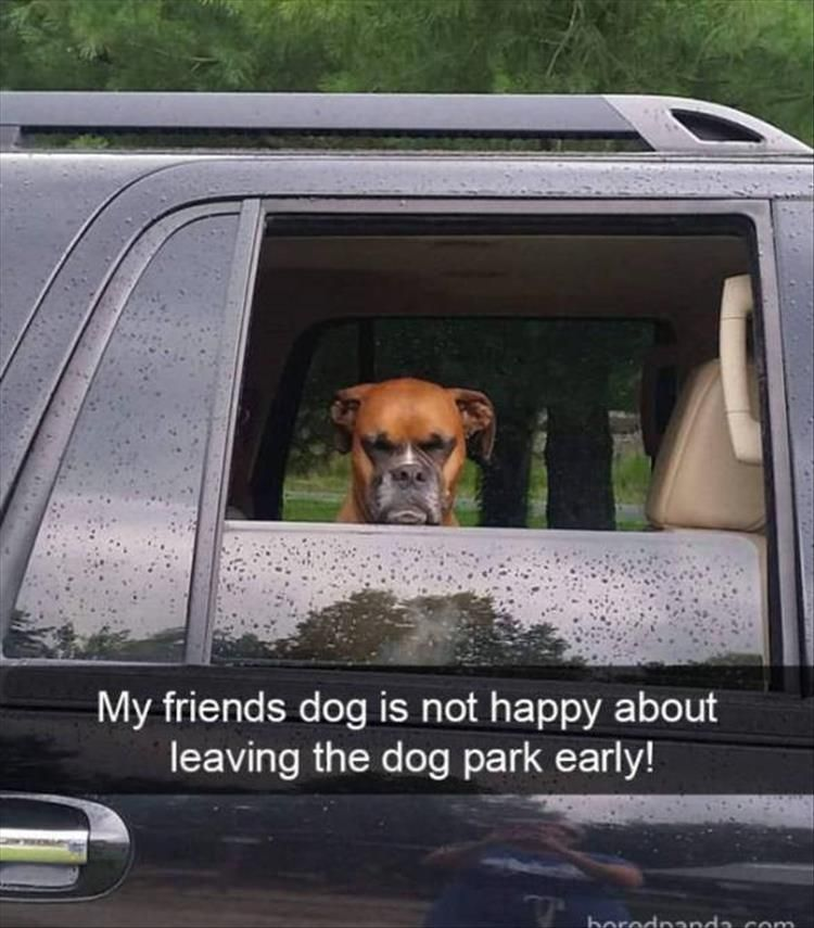 "Funny Animal Picture Dump Of The Day 23 Pics #funnydogquotes explore Pinterest""> ..."