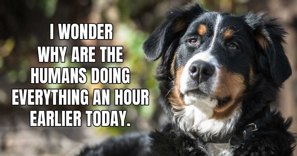 We are about to put an end to the Dog Meme drought with these…