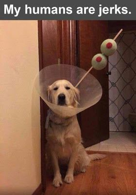 """Funny Dog Shaming : This is not funny #funnydogvideos explore Pinterest""""> #funnyd..."""