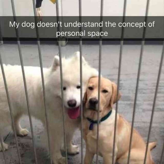 "40 Funny Pictures For Today ( #88) #funnydogvideos explore Pinterest""> #funnydogv..."