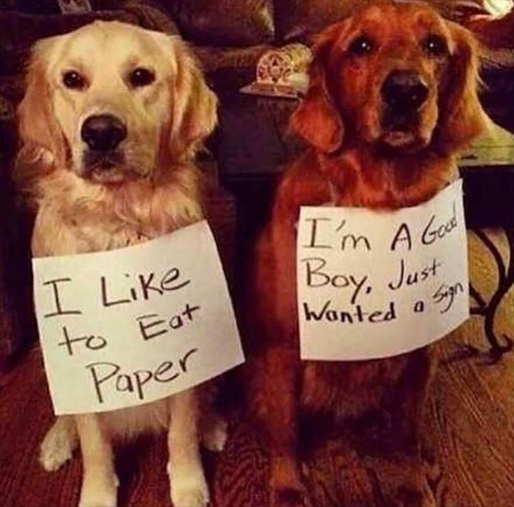 "Funny Animal Picture Dump Of The Day 25 Pics #funnydoghumor explore Pinterest""> #..."