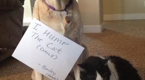 "Dog Shame : Photo #funnydogshaming explore Pinterest""> #funnydogshaming"
