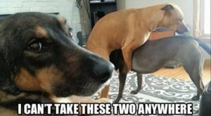 Funny Animal Pictures Of The Day – 11 Images #funnydoghilarious explore Pinterest&#8...