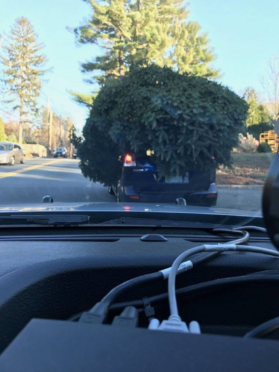 FOX NEWS: Massachusetts police stop car with massive Christmas tree on top