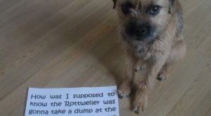 "Dog-shaming #funnydogshaming explore Pinterest""> #funnydogshaming"