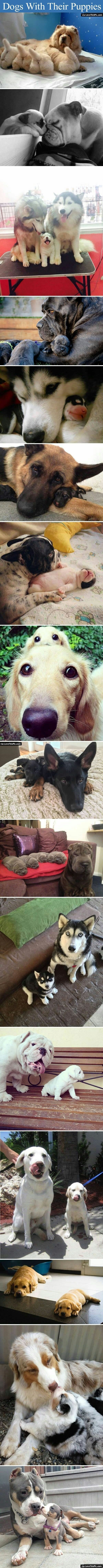Dogs With Their Puppies cute animals cat cats adorable animal kittens pets kitten funny…...