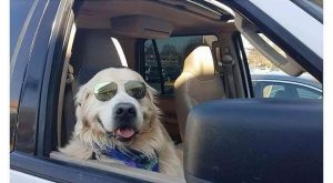 """40 Funny Dog Pictures With Captions #funnydogvideos explore Pinterest""""> #funnydog..."""