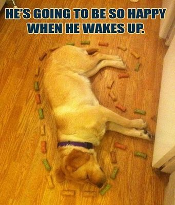"50 Best Animal Pictures With Captions 4 #funnydogwithcaptions explore Pinterest"">..."