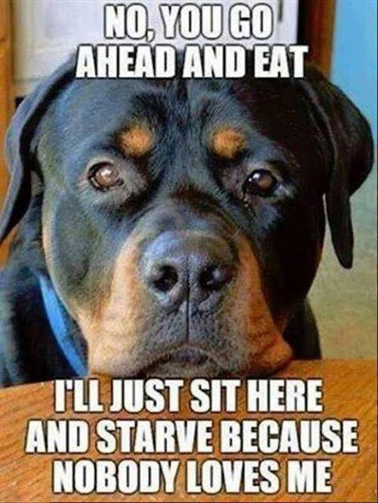 """Funny Animal Picture Dump Of The Day 23 Pics #funnydogpictures explore Pinterest""""&gt..."""