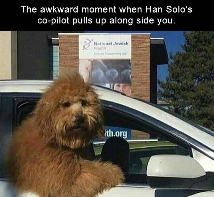 """32 Funny Memes And Pictures Of The Day #funnydogmeme explore Pinterest""""> #funnydo..."""