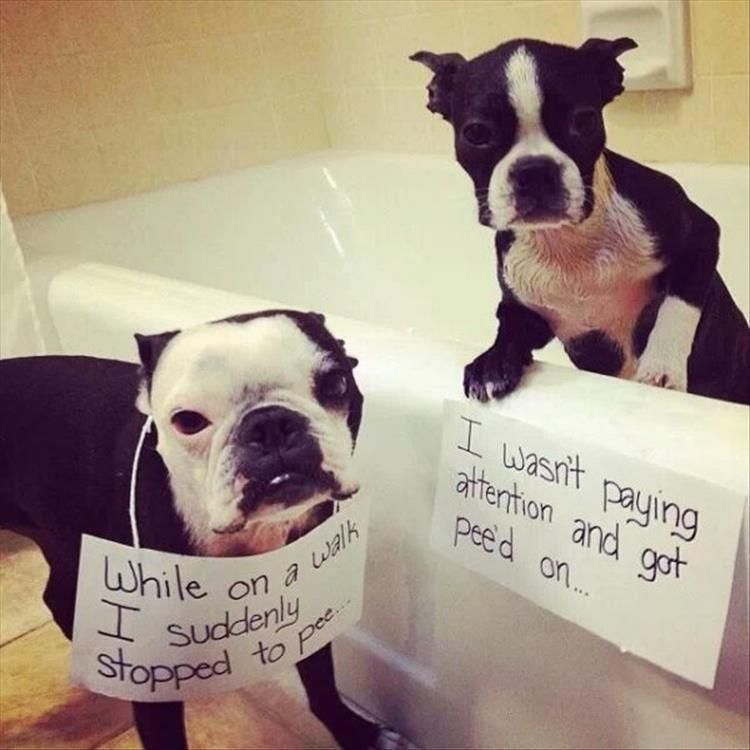 """Funny Animal Pictures Of The Day – 25 Pics #funnydogshaming explore Pinterest""""..."""