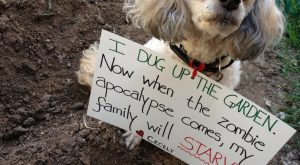 "Dog Shaming at its finest. #funnydogshaming explore Pinterest""> #funnydogshaming"