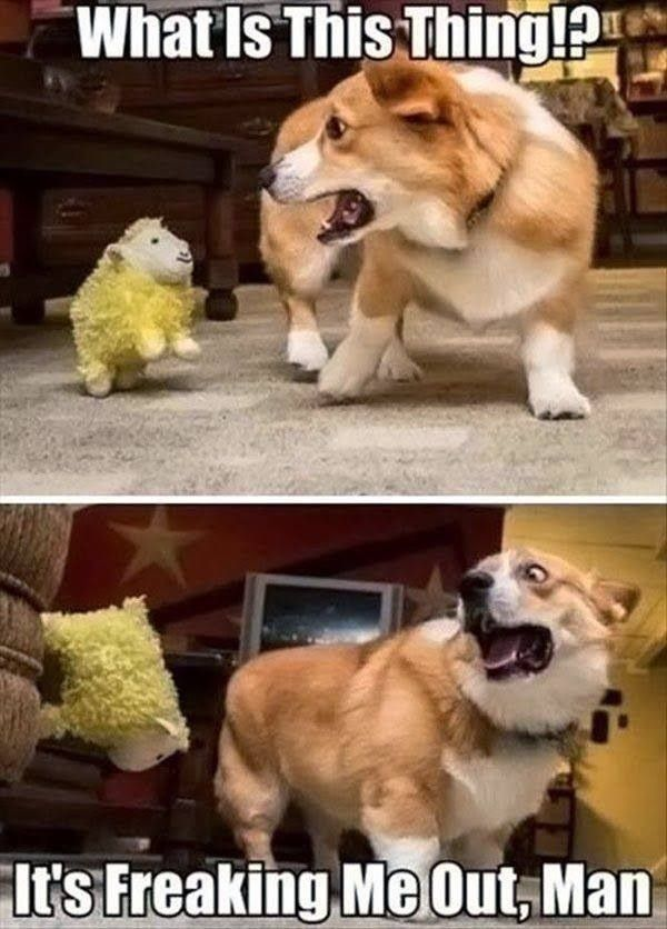 25 Best Funny animal Quotes and Funny Memes | Quotes and Humor #funnydoghumor explore…