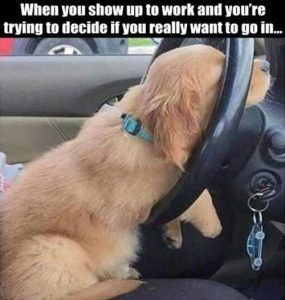 when-you-show-up-to-work-funny-dog-on-steering-wheel #funnydoglaughter explore Pinterest&#...