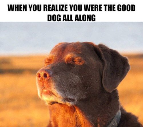 100 Dog Memes That Will Keep You Laughing For Hours #funnydoghilarious explore Pinterest&#...