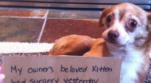 """My owner's beloved kitten had surgery yesterday, while she was resting I ate ..."