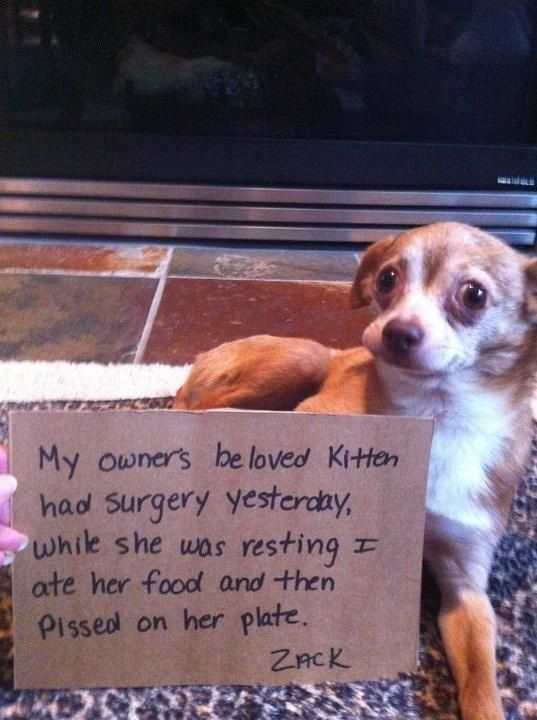 """""""My owner's beloved kitten had surgery yesterday, while she was resting I ate ..."""