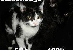 Funny Animal Pictures, cat memes, Just like cat, funniest animals, cat fun, cat funny,…