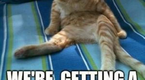 Top 15 Funniest Memes Of The Year ft. Funny Cats – Gap Ba Gap