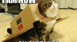 13 Memes That Perfectly Match The 'Funny Cat-egory' – I Can Has Cheezbur...